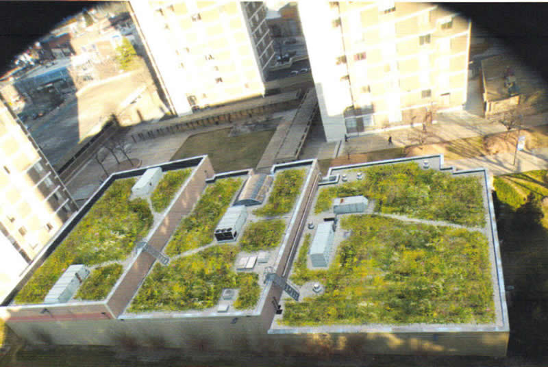 Albert Einstein College of Medicine - Falk Athletic Center Green Roof